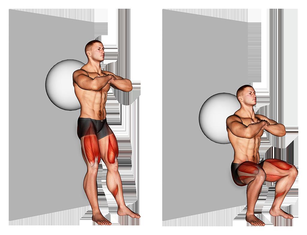 הדגמת התרגיל שפיפה עם כדור פיזיו